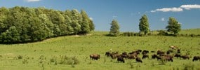 About Buffalo Hills Bison